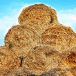 Hay — Stock Photo #2677883