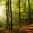 Morning in forest — Stock Photo #2544249