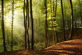 Ráno v lese — Stock fotografie