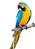 Colorful parrot — 图库照片