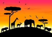Africa sunset — Stock Vector