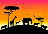 Africa sunset — Stock Vector