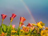 Flowers and rainbow — Stock Photo