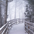 Winter Forest Boardwalk — Stock Photo