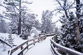 Morning Snow on Wooden Boardwalk 3 — Stock Photo