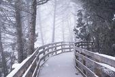 Winter Forest Boardwalk — 图库照片