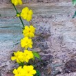 Stock Photo: Yellow Flowers on a Vine
