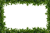 Green leafy hedge frame — Stock Photo