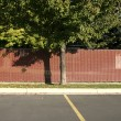 Stock Photo: Tree in Parking Lot