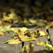Close up on the Leaves Falling — Stock Photo