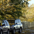 Two Cars under the Trees — Stock Photo