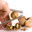 Cracking Walnuts — Stock Photo