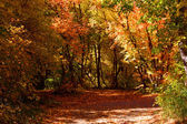 Fall and the Beautiful - 759 — Stock Photo