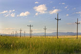 Electric Posts in a Field - Helena — Photo