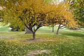 Sonbaharda ağaçlar — Stok fotoğraf