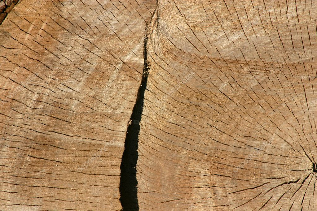 Close up on a Tree Trunk  Stock Photo #2600490