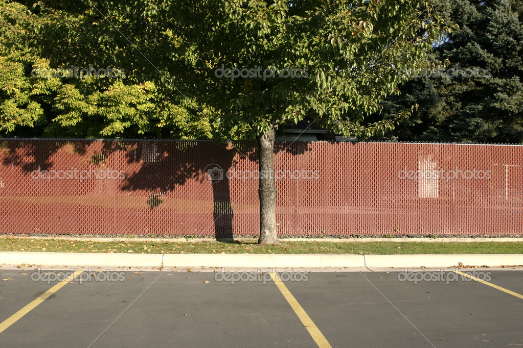 Fenced Tree in a Parking Lot — Stock Photo #2600682