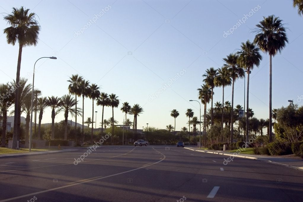 Palm Trees Along the Road of a Strip Mall with Blue Skies  Stock Photo #2601461