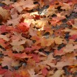 Close up Red Leaves — Stock Photo