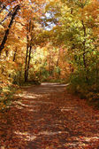 Down the Fall Path — Stock Photo