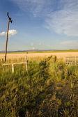 Field in Helena — Stock Photo