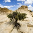 Close up on the Rocks with a Small Tree — Stock Photo #2692200