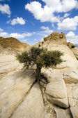 Close up on the Rocks with a Small Tree — Stock Photo