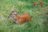 Deer with little ones — Stock Photo