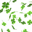Falling Shamrock Leaves — Stock Photo