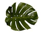 Palm blatt — Stockfoto