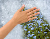 Field of flowers behind a frozen window — Stock Photo