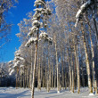 Winter forest — Stock Photo #2638170