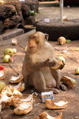 Monkey in a temple in Lop Buri Thailand — Stock Photo