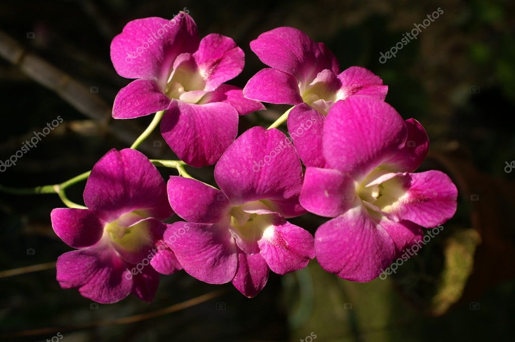 Orchidee — Stock Photo #2625366