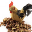 The chicken_4 — Stock Photo