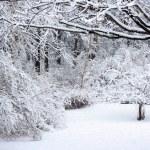 Snow Scene — Stock Photo