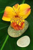 Freesia Blossom with Leaf and Stones — Stock Photo
