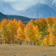 Stock Photo: Grand Tetons in Fall