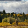Stock Photo: Grand Teton Foliage