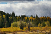 Grand Teton Foliage — Stock Photo