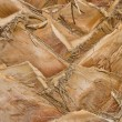 Stock Photo: Palm bark