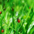 Fresh green grass with water drops — Foto de Stock