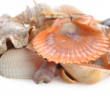 Cockleshells and starfish - Stock Photo