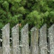 Royalty-Free Stock Photo: Old fence