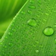 Green leaf and water drop — Stock Photo #2649550