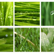 Different grass and water drops pictures — Stock Photo