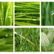 Royalty-Free Stock Photo: Different grass and water drops pictures