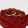 Red rose with rings — Stock Photo