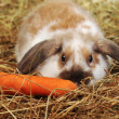 Rabbit on hay — Stock Photo