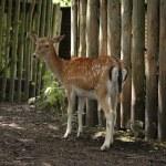 Mammal in zoo — Stock Photo #2651154